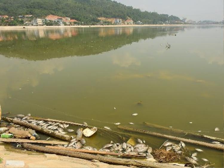 Hai hồ điều hòa cạnh quốc lộ 18A, mới được cải tạo, tuy nhiên nguồn nước ô nhiễm nghiêm trọng. Ảnh: Minh Cương