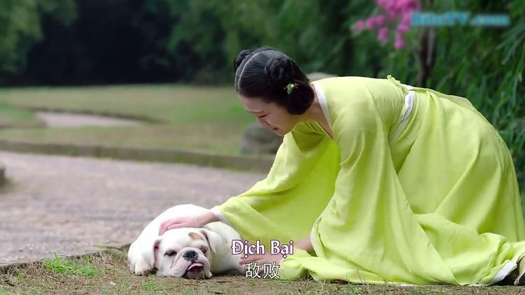 Ấn tượng với dàn thú cưng được đầu tư mạnh tay trong bộ phim chiếu mạng Manh phi giá đáo