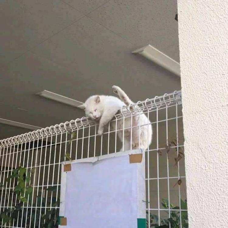 Chùm ảnh: Những pha ngủ ngày bá đạo của các quàng thượng mèo trên khắp cả nước
