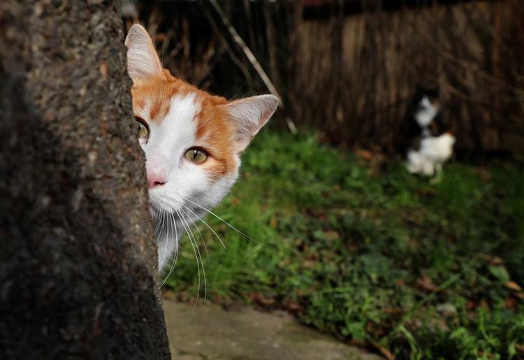 Có một nơi mà ở đó, mèo là bá chủ, còn con người thì rất phục tùng mèo