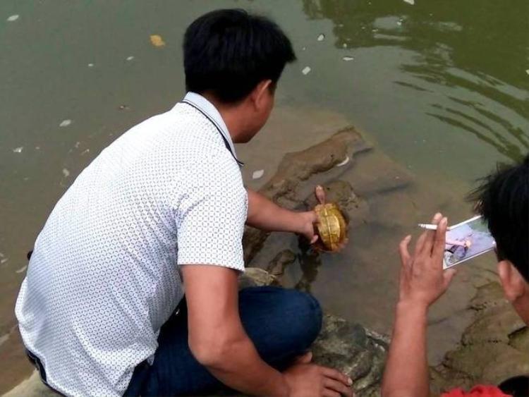 Anh Thắng sau đó đã thả con rùa màu vàng này về với tự nhiên trước sự chứng kiến của nhiều người. (Ảnh: Hùng Cường).