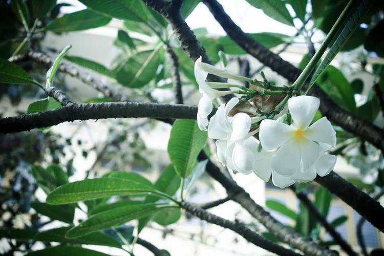 Đặc biệt, khi đến với ĐH Nông Lâm, chúng ta còn được ngắm rất nhiều các loài hoa khác nhau, khiến tâm hồn thư thái, dễ chịu hơn bao giờ hết.