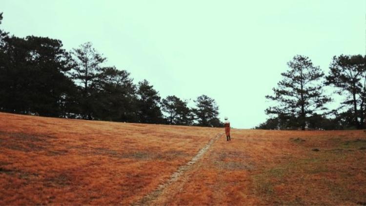 Ngọn đồi trước rừng thông.