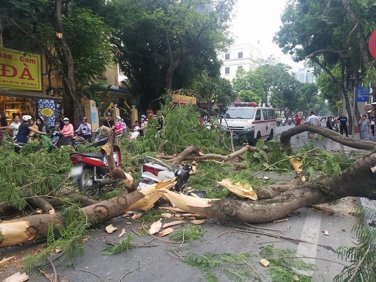 Hiện trường vụ cây đổ đè trúng 2 xe máy đi đường.