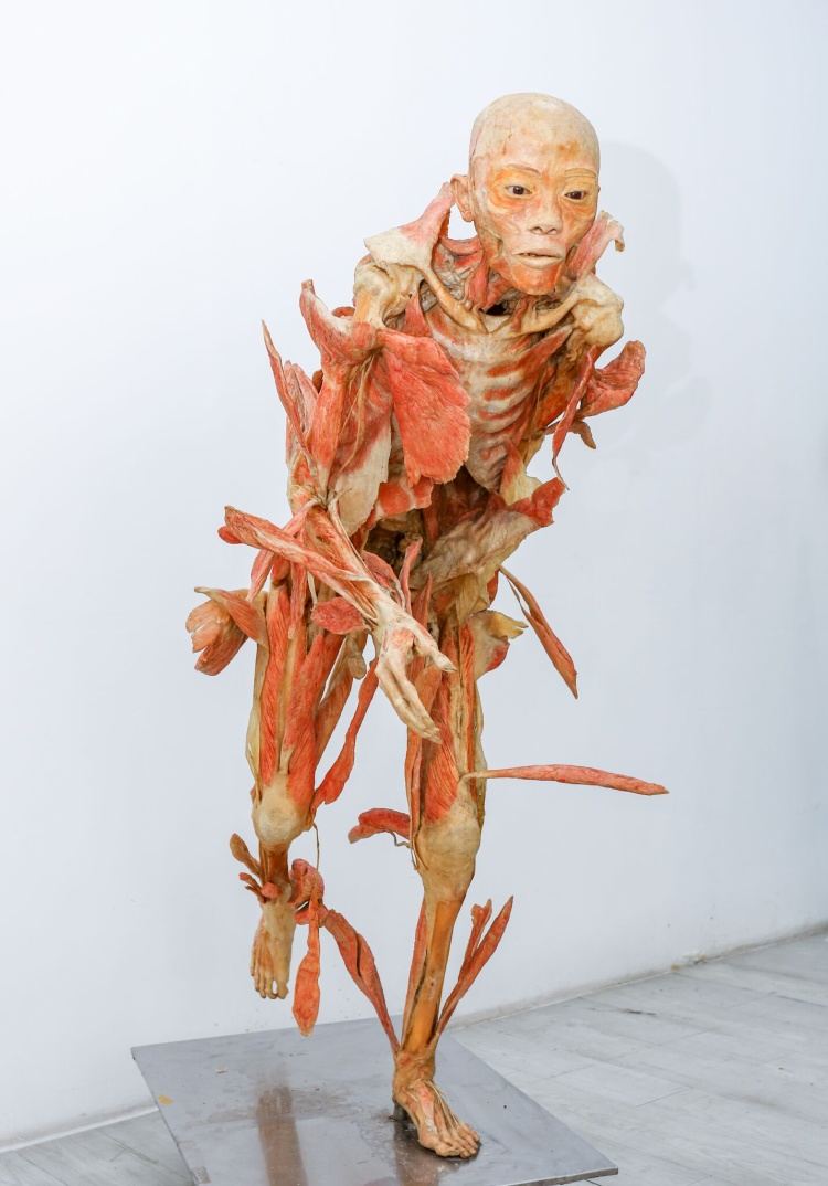 Ra mắt triển lãm độc đáo 'Sự bí ẩn đặc biệt của cơ thể người'