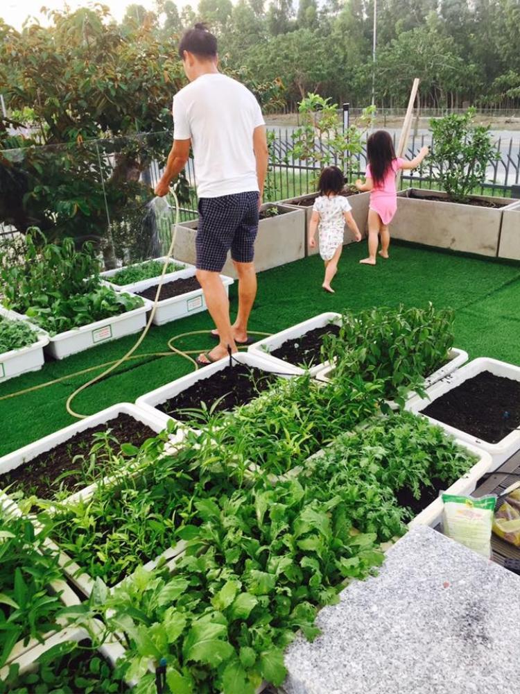Vườn rau xanh đẹp mắt của ông bố 4 con.