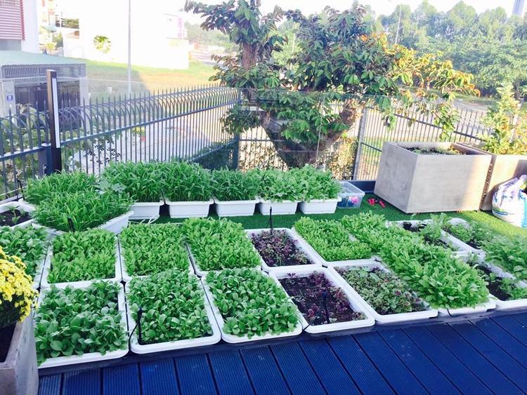Vườn rau được sắp xếp rất gọn gàng.