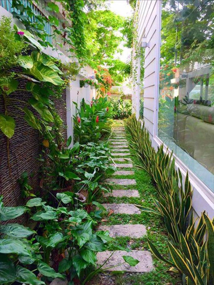Dọc lối đi hai bên nhà cũng được anh khéo léo trồng nhiều loại cây cỏ đa dạng.