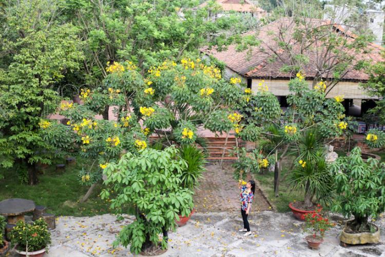 Những gốc mai hoa đăng nhìn từ trên cao, đến dịp Tết chúng lại thi nhau bung nở vô cùng đẹp mắt.