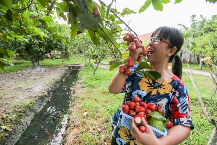 Ngoài ra, ca sĩ Ánh Tuyết còn sở hữu vườn cây trĩu quả tươi tốt quanh năm.
