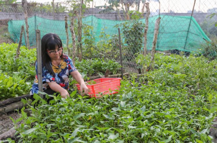 Dĩ nhiên không thể thiếu vườn rau sạch với đủ chủng loại muống, quế, xà lách Pháp, cà chua,…