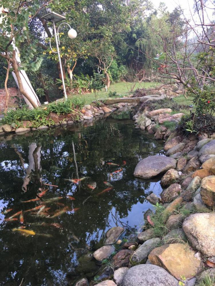 Chiếc hồ to với đàn cá Koi tô điểm thêm sức sống cho khu vườn.