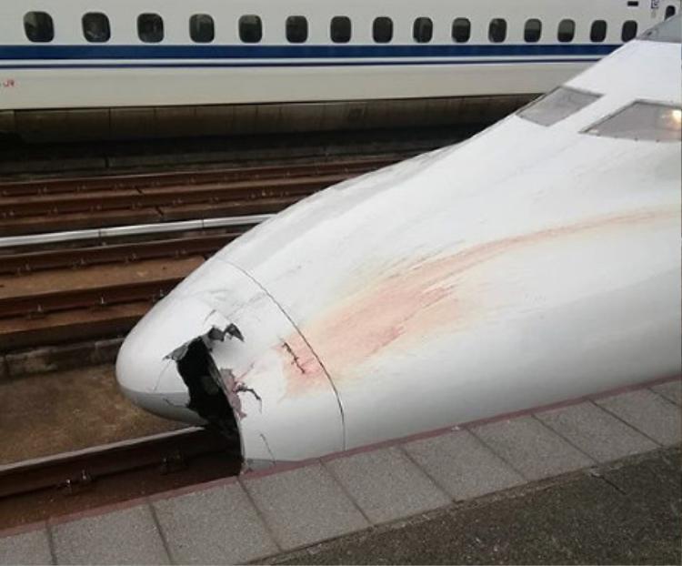 Mũi tàuNozomi 176 có vết lõm lớn sau vụ va chạm. Ảnh:Mainichi