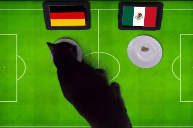 Mèo Cass dự đoán Đức sẽ đánh bại Mexico.