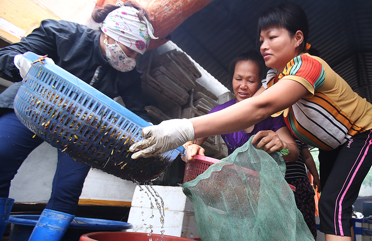 Tháng 6 là mùa nông nhàn, học sinh nghỉ hè nên các gia đình ở xã Lê Thanh huy động được nhiều nhân công vào việc sơ chế.