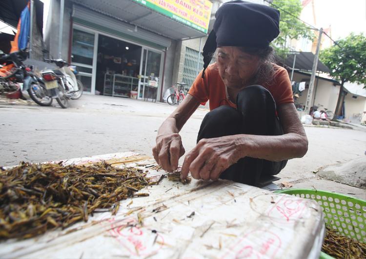 """Bà Đặng Thị Cấm, 89 tuổi, cho biết hàng ngày bà nhặt cánh châu chấu cùng mọi người để """"đỡ buồn chân, buồn tay và kiếm thêm"""". Sáng bà ngồi từ 7h đến hơn 12h được khoảng 2-3 kg, tiền công trên dưới 30.000 đồng."""