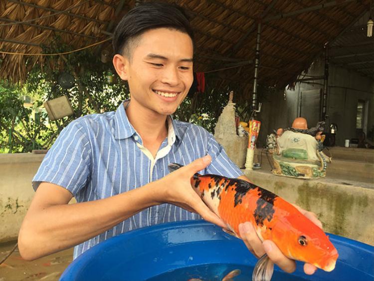 """Anh Nguyễn Anh Tuấn cũng là chủ trang trại nuôi cá Koi tại khúc sông Hồng (xã Mỹ Tân, huyện Mỹ Lộc, Nam Định) và sở hữu nhiều loài cá Koi đẹp. Theo anh Tuấn, cá Koi được mệnh danh là """"quốc ngư"""" của Nhật Bản. Cá Koi có thể sống tới cả trăm năm tuổi, bình thường nuôi trong hồ nhân tạo cá Koi cũng thể sống tới 25 - 35 năm, trọng lượng của cá có thể lên tới hàng chục kg."""