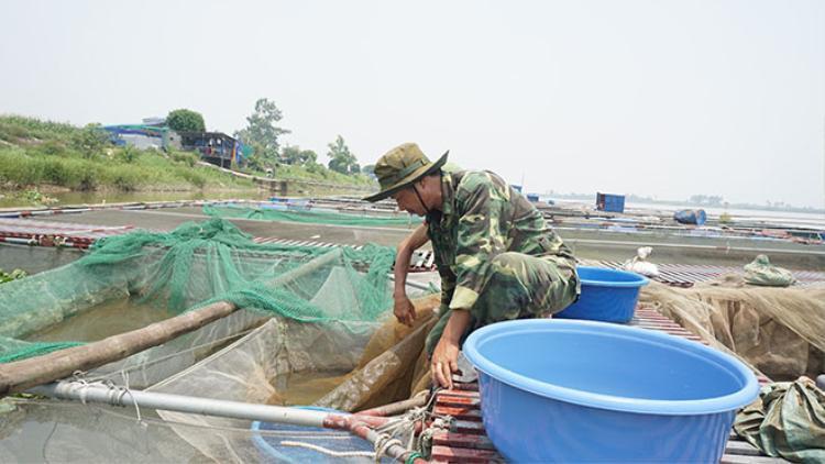 """Năm 2012, ông Sơn quyết định đầu tư hơn 1 tỷ đồng đưa con cá Koi ra sông Hồng và nuôi bằng lồng. Ông đặt tên cho trang trại của mình là """"Sông Hồng Koi Farm"""". Kể từ đó, mỗi năm, cơ sở của ông cung ứng trên 10 tấn cá cảnh các loại ra thị trường, thu lợi nhuận nhiều tỷ đồng."""