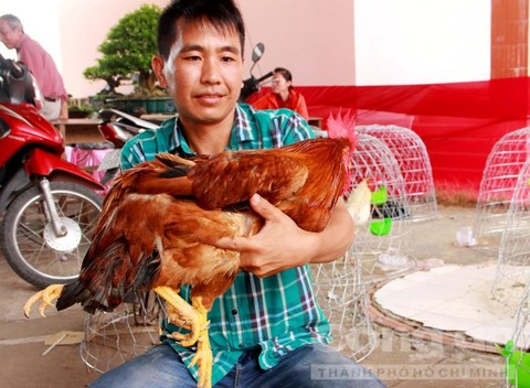 Chủ nhân con gà này là anh Nguyễn Văn Dẹn (35 tuổi, ngụ xã An Phước, huyện Mang Thít , tỉnh Vĩnh Long).