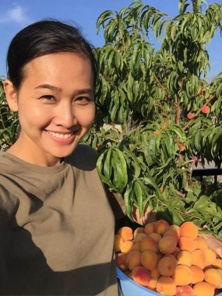 Dương Mỹ Linh từng thu hoạch đào trong vườn nhà Bằng Kiều thời điểm hai người vẫn còn yêu nhau.