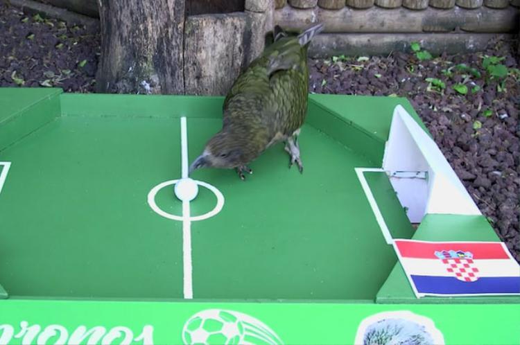 Chú vẹt Newton dự đoán Croatia giành chiến thắng trước Argentina.