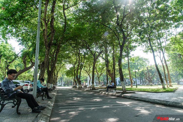 Lối đi lại xanh mát như một công viên thu nhỏ.