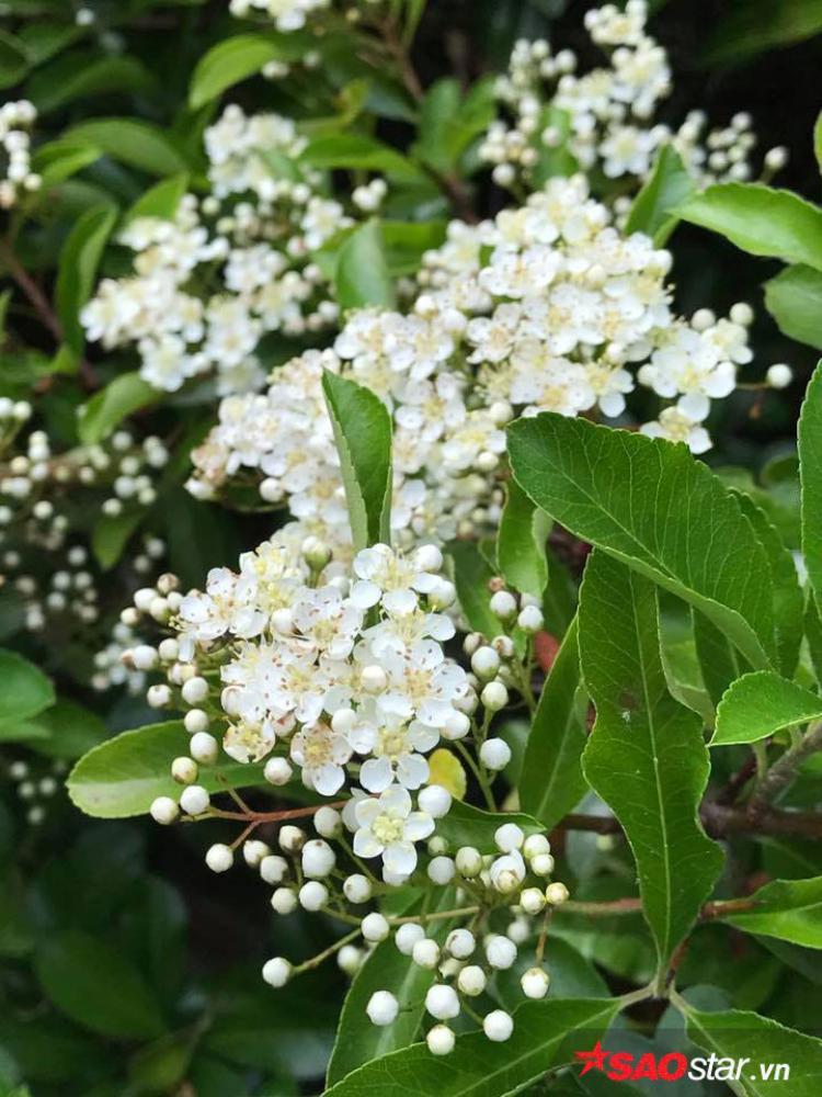 Ngoài hoa hồng và hoa tử đằng, khu vườn của vợ chồng chị Xinh còn nhiều loại hoa khác.