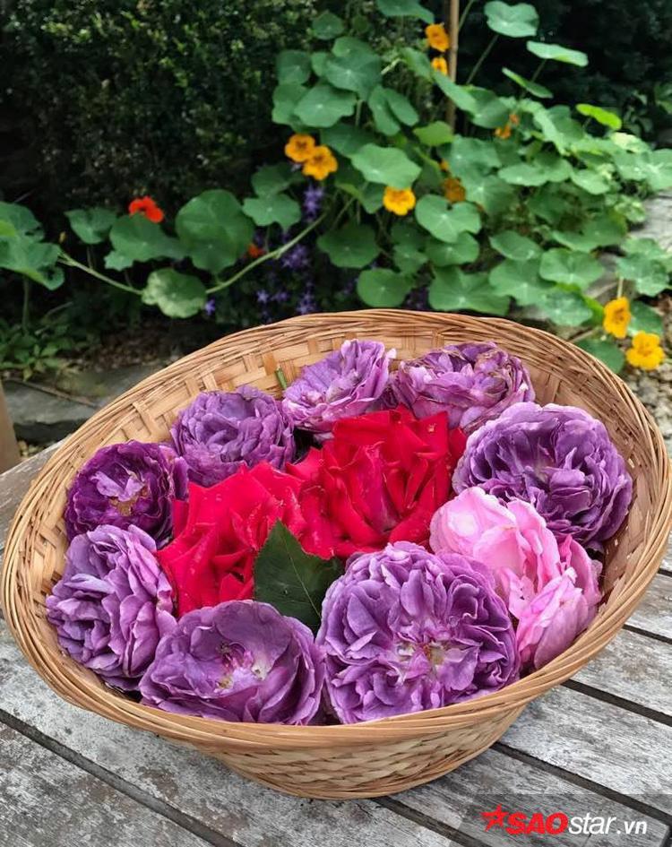 Có khoảng 18 loại hồng khác nhau từ hồng leo, hồng thân gỗ, hồng chùm… với đủ loại màu sắc khác nhau.