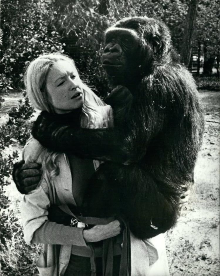 """Tình bạn tuyệt vời giữa nhà tâm lý học động vật Francine """"Penny"""" Patterson và chú khỉ đột Koko. Ảnh: Rex"""