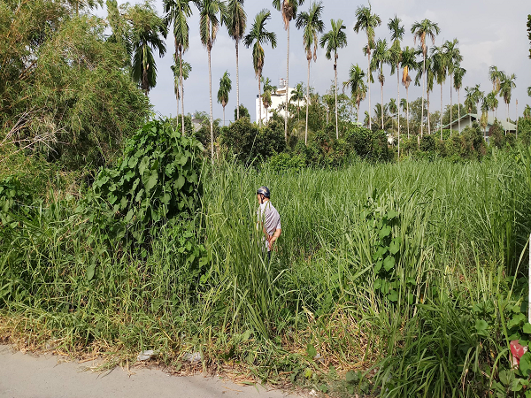 Hiện trường phát hiện người đàn ông tử vong bất thường trong bụi cỏ ven đường.
