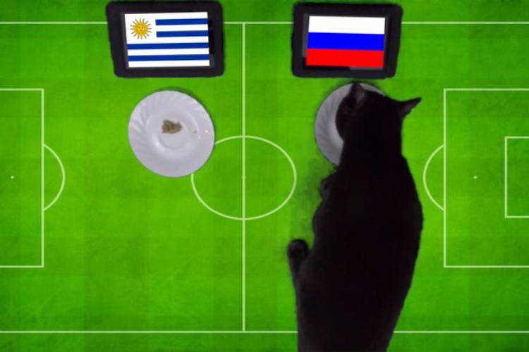 Mèo Cass dự đoán Nga sẽ đánh bại Uruguay.
