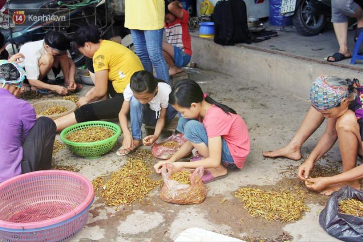 Khung cảnh tấp nập thường thấy tại làng Lai Xá mỗi mùa lúa chín.