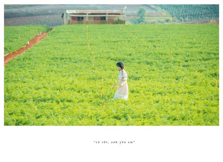 """Bộ ảnh """"Cà rốt, anh yêu em"""" gây sốt giới trẻ trong thời gian vừa qua đã khiến nhiều người phải truy lùng cánh đồng cà rốt này.(Ảnh:Nguyễn Thế Vinh)"""