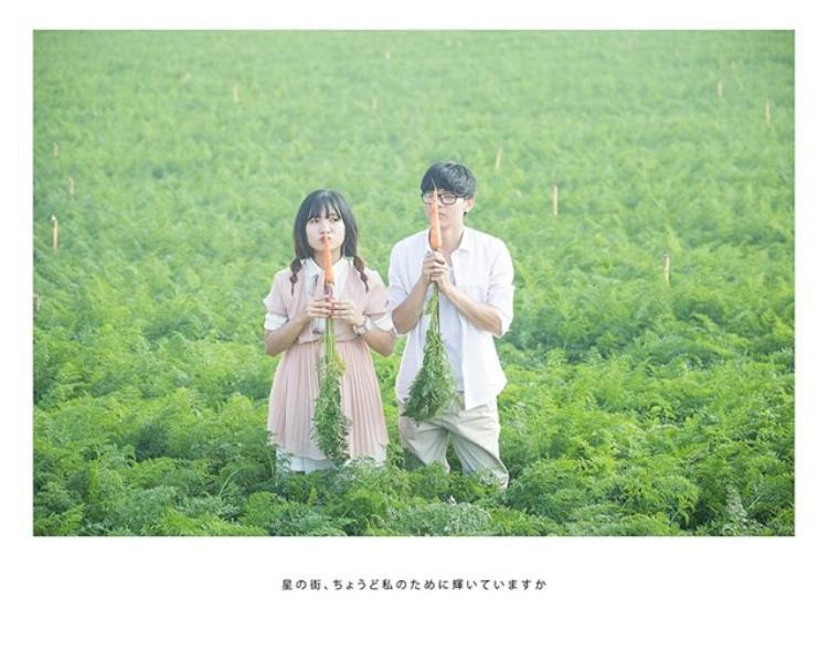 Cánh đồng cà rốt thuộc khu vực Trại Mát (cách trung tâm thành phố Đà Lạt 7km). Trang trại nổi tiếng này chính là khu vực gieo trồng nông sản với trữ lượng lớn cung ứng cho cả nước cũng như có giá trị xuất khẩu. (Ảnh:Nguyễn Thế Vinh)