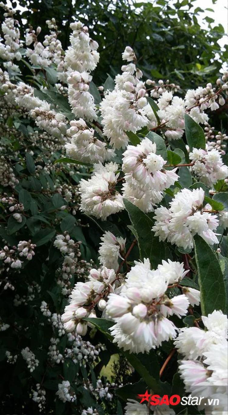 Vì thời tiết nơi đây chủ yếu là lạnh nên anh chị chọn các loại cây lâu năm, chịu được giá lạnh có khi tới âm 20 độ.