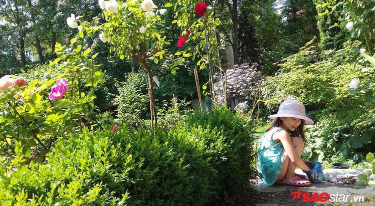 Để biến khu vườn toàn cây cổ thụ thành nơi trồng đủ loại hoa, rau thì anh chị đã rất vất vả. Chị Trang cho biết đa số chồng chị phải làm hết vì toàn việc nặng như cặt cây, đào rễ, thay đất… chị chỉ phụ được chồng phần nào.