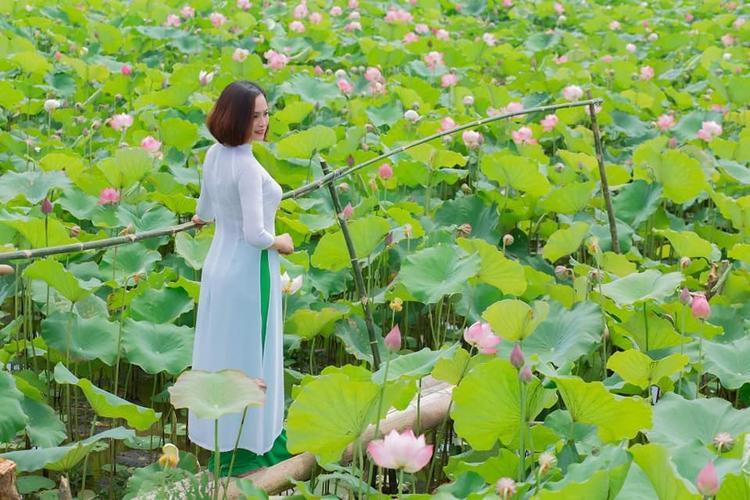 Đầm sen như một nét chấm phá nằm trong lòng quê hương lúa Thái Bình.