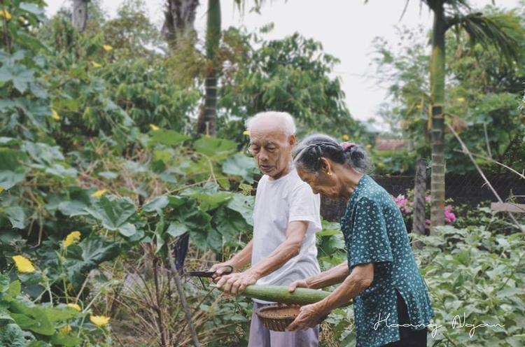 Ông bà cùng chăm sóc cho vườn rau nho nhỏ của mình.
