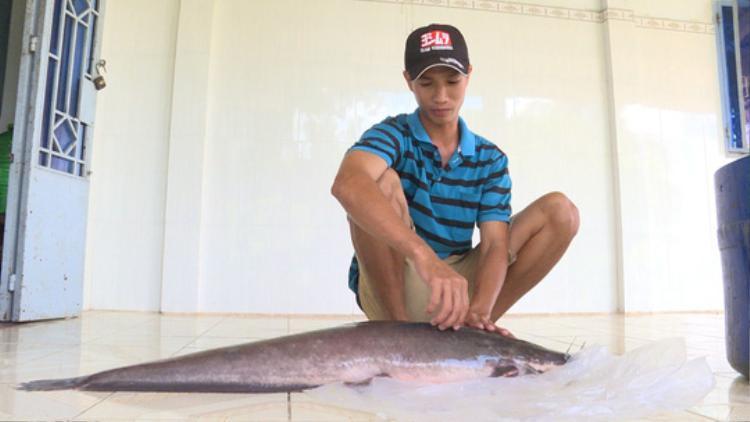Con cá trên dài 1,2 m, nặng gần 12 kg mà anh Vũ bắt được.