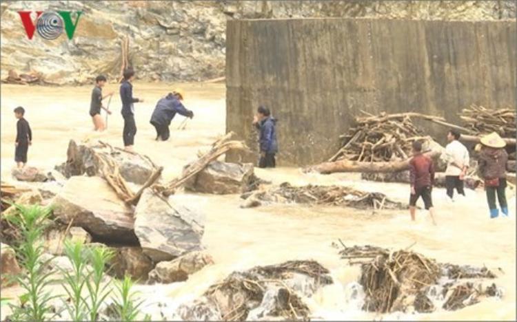 Nhiều người dân Lai Châu vẫn đi vớt củi trong mưa lũ