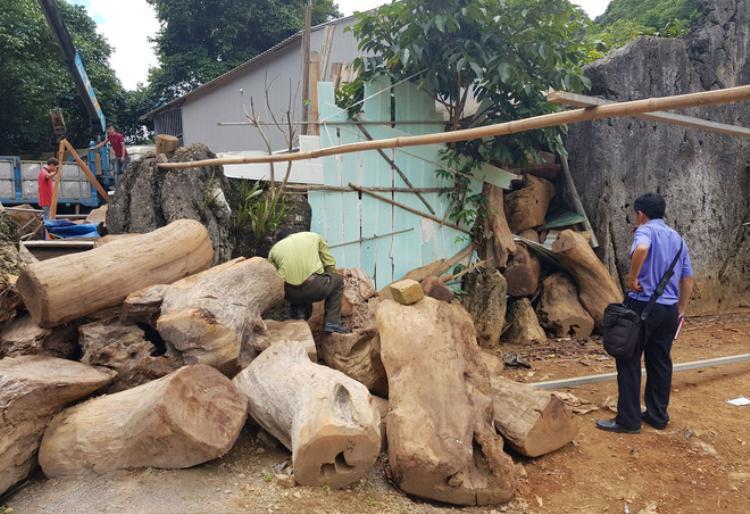 Hàng chục khối gỗ quý chất bên trong và xung quanh căn nhà. Ảnh: Trí thức trẻ.