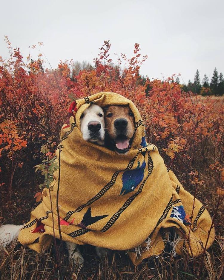 """""""Mùa thu thật tuyệt, nhưng hơi lạnh anh nhỉ?"""""""