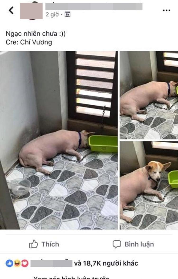 Những bức ảnh về chú chó được chủ cạo lông theo cách độc đáo này đang gây sốt trên mạng xã hội.