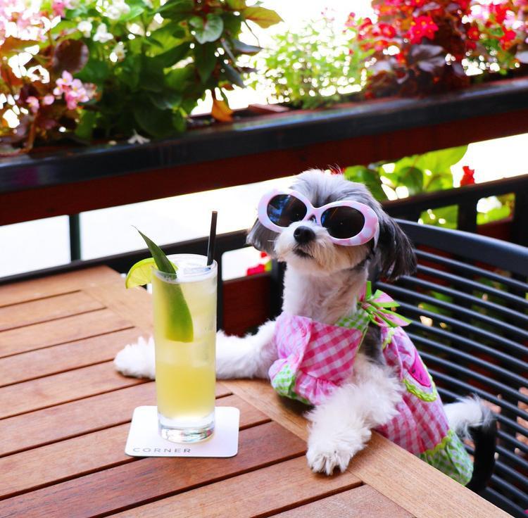 Chân dung của Tinkerbelle - chú chó may mắn nhất thế giới ngày hôm qua.