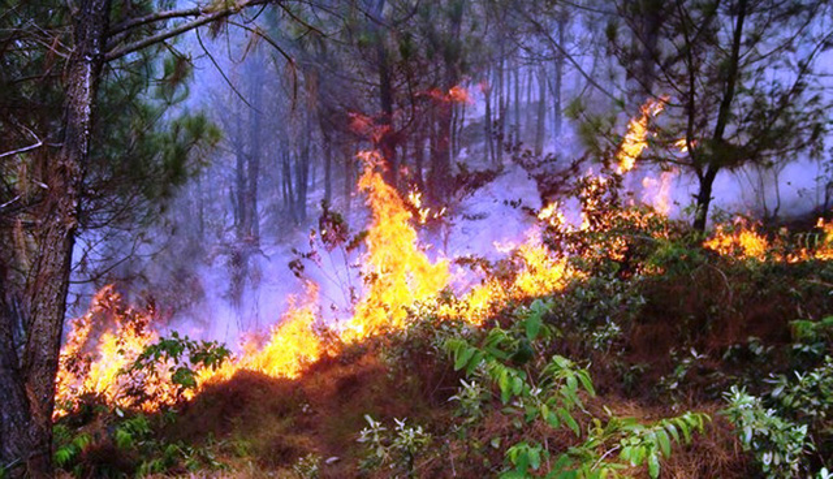 Rừng xã Khánh Sơn cũng bị lửa thiêu.