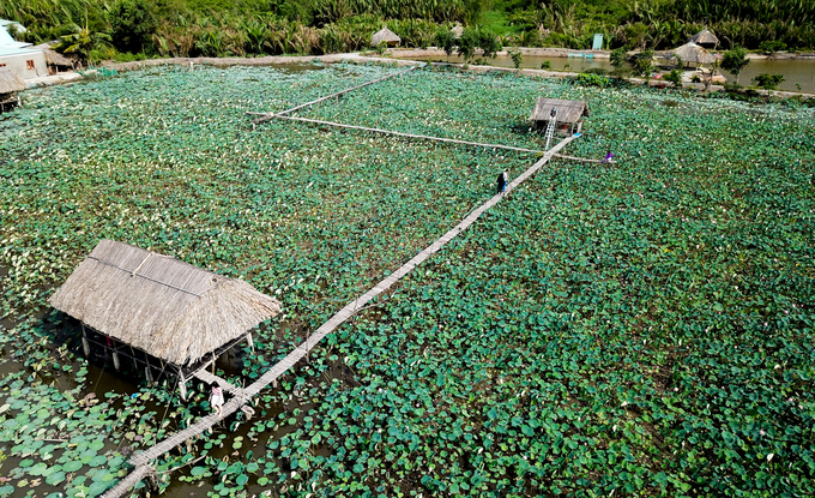 Đầm sen Tam Đa (quận 9, TP HCM) được gia đình anh Lý Mộng Thành trồng từ hai năm nay. Đầm sen rộng khoảng 3 ha, nằm bên bờ sông Tắc, đoạn hạ nguồn của sông Đồng Nai, cách trung tâm Sài Gòn khoảng 20 km.