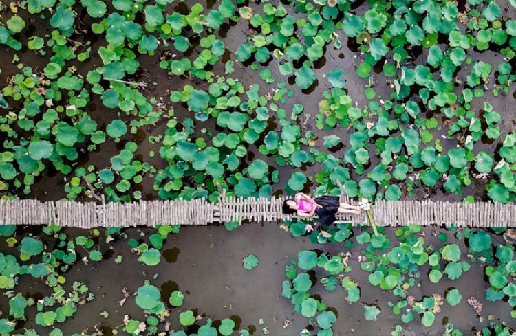 """""""Em ở huyện Hóc Môn, phải chạy xe gần 40 km mới đến được đây, để một lần chụp hình thỏa thích với sen. Ở Sài Gòn rất khó kiếm được cả một đầm sen rộng như vậy"""", Kiều Ái, 27 tuổi, cho biết."""