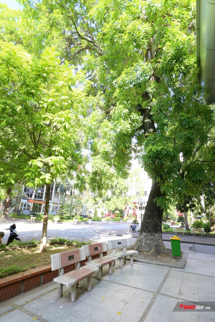 Giữa những ngày siêu nóng nực, ngôi trường vẫn thật xanh mát với những hàng cây cổ thụ nằm rải rác trong khuôn viên.