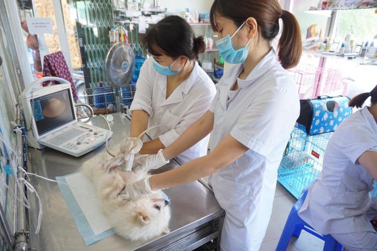 Hàng loạt chó Tây bị sốc nhiệt phải nhập viện truyền nước giữa ngày nắng nóng kinh hoàng