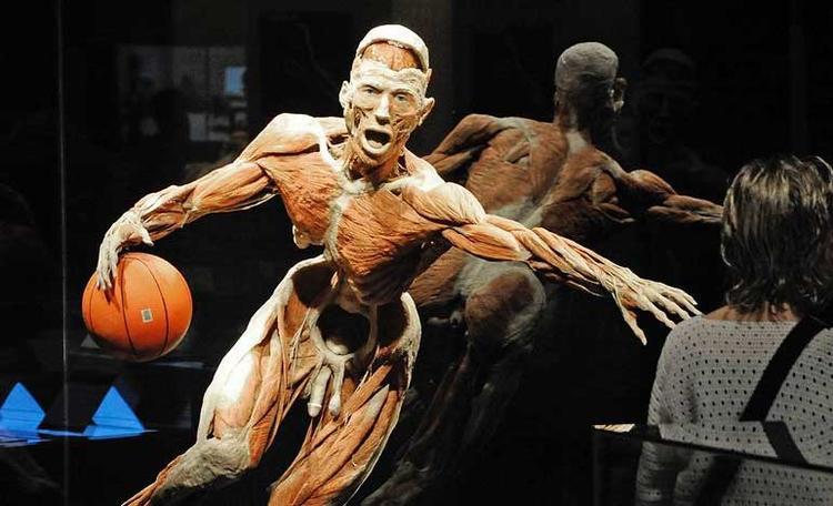 Bên trong bảo tàng cơ thể người đầu tiên trên thế giới.